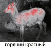 Горячий красный в iRay Xeye E2N