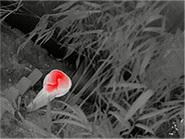 Горячий красный в iRay Xeye E3pro